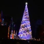 20131215_tree
